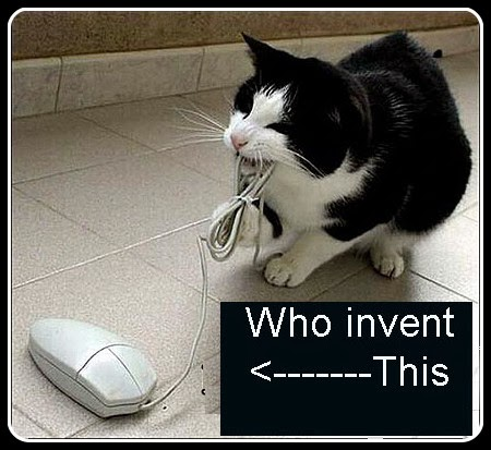 funny-cat-and-computer-mouse-01-copy